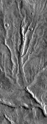 The channels in this valley network branch the way trees do — and similar to the way river valleys do on Earth. Also, the sharper details in the main channel here suggest a renewed episode of water flow. (NASA/JPL-Caltech/Arizona State University)