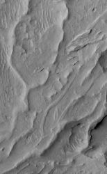 This looks like branching stream valleys, but the light comes from the left and these are ridges, an example of inverted channels. (NASA/JPL-Caltech/Malin Space Science Systems)